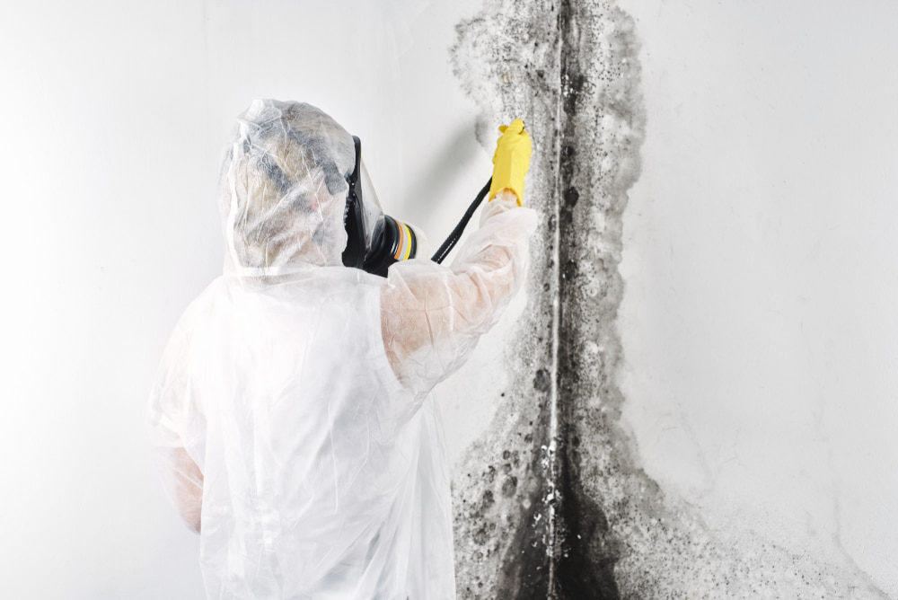 Where can I find the most experienced mold remediation company in Orange County