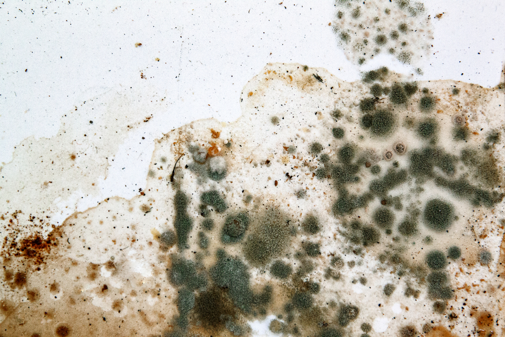 Levels-of-Mold-Remediation
