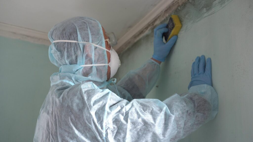 What-is-Level-3-Mold-Remediation-scaled