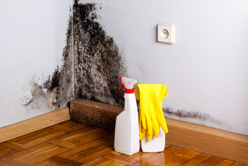 Does mold have to be removed professionally