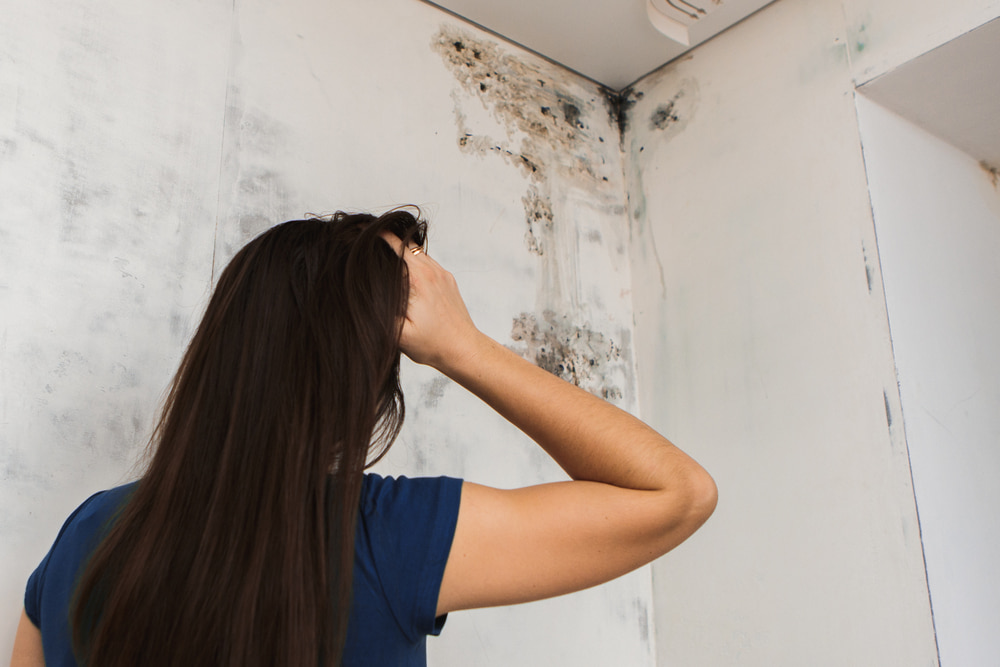 How long does it take to remove mold from a house